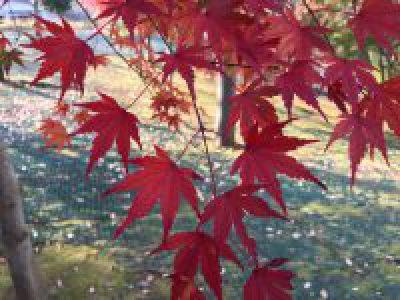 ズーラシアの秋